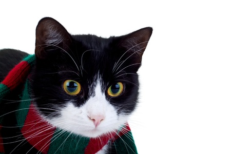 cute black and white cat wearing a christmas scarf photo