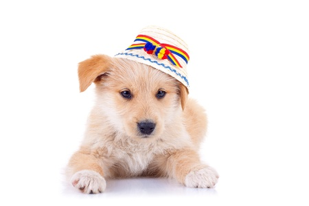 picture of a cute yellow stray dog wearing a romanian traditional hat photo