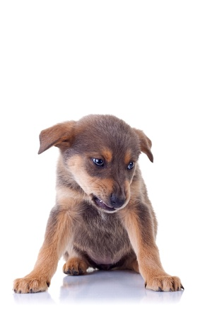picture of an angry homeless puppy, on a white background photo