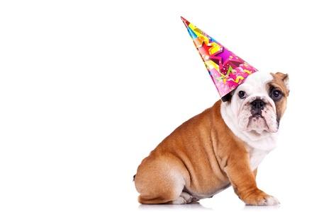 Zijaanzicht van een Engels bulldog zitten en het dragen van een feest hoed met kopie ruimte Stockfoto