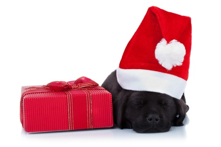 labrador christmas: cute little santa - black labrador puppy sleeping near a red present, on white background