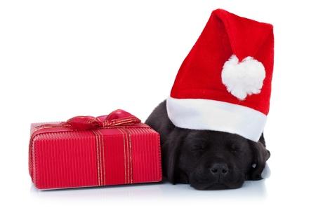 cute little santa - black labrador puppy sleeping near a red present, on white background