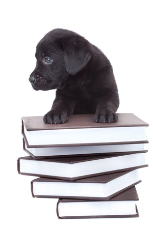 smart little labrador -  black lab puppy standing on a pile of books and looking at its side photo