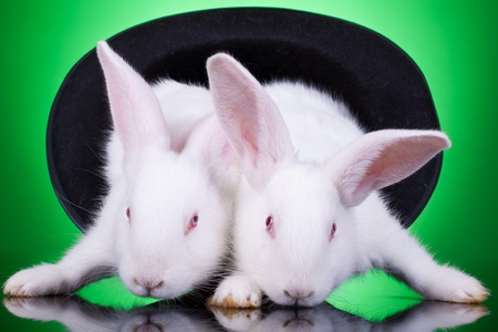 aggresive: evil looking bunnies standing in a hat over green backgroun