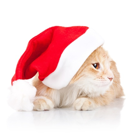 adorable little cat wearing a santa hat and looking to a side over white background photo