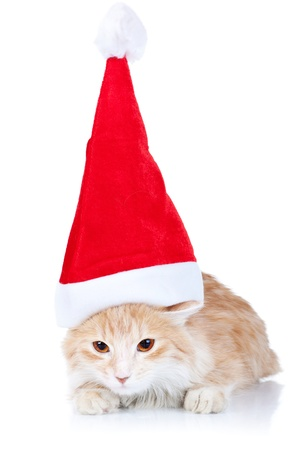 cute red and white cat wearing a santa hat on a white background photo