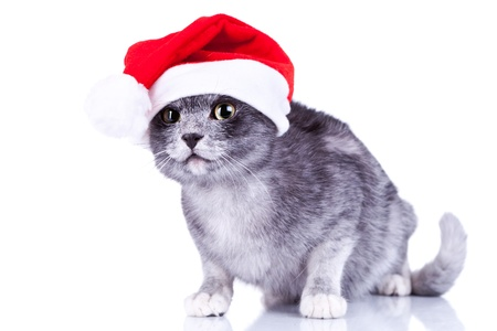 curious cute cat wearing a santa hat looking at something over white background photo