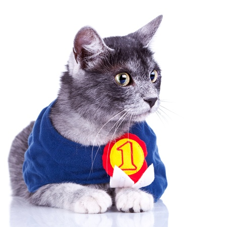 curious champion cat looking to its side on a white background