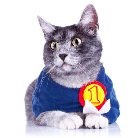 campeón adorable gatito para quedarse quieto para la cámara, en el fondo blanco Foto de archivo
