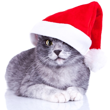 adorable little kitty with a santa cap on lying on a white background photo