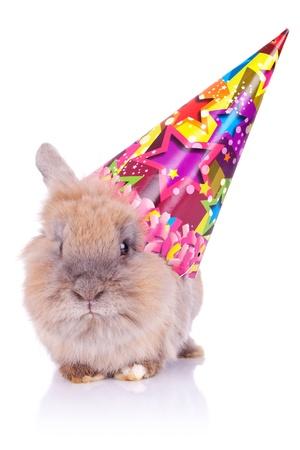 cute rabbit: imagen de un conejo de cumplea�os linda que llevaba un sombrero de fiesta, en el fondo blanco Foto de archivo