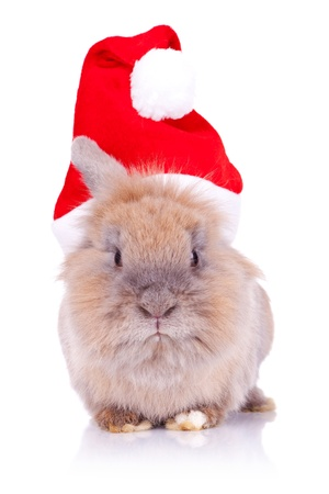 bunny xmas: adorable santa rabbit looking at the camera, on white background Stock Photo