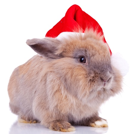 christmas costume: closeup picture of a cute little santa bunny on white background Stock Photo