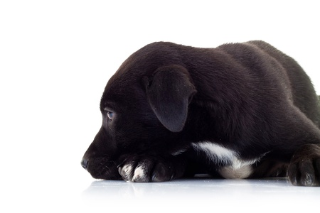 side view of a lonely little black puppy dog looking very sad on white background photo