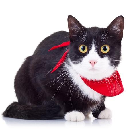 adorable chat noir et blanc en regardant la cam�ra fond onwhite Banque d'images - 15160182
