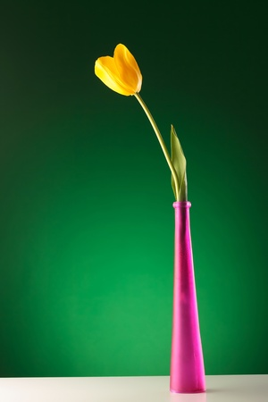 beautiful yellow tulip in a pink vase on a reflective table, on green background photo