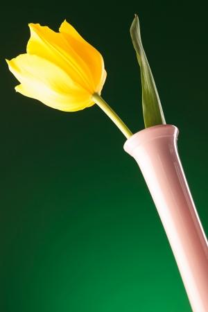 bellow: foto desde abajo de un tulip�n amarillo fresco sobre fondo verde Foto de archivo
