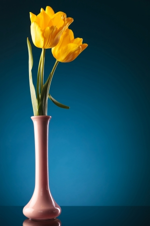 tulips in vase: three fresh yellow tulips in a purple vase on a blue background