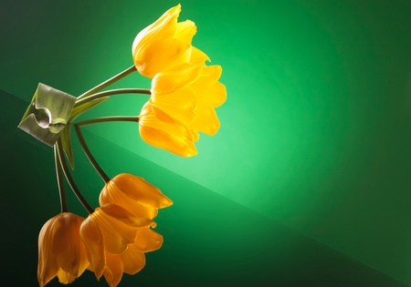 colorful image of  three yellow tulips with reflexion on a table