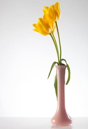three lovely yellow tulips in a purlpe vase on light gray background photo