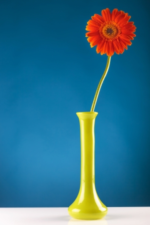 an orange gerbera flower in a yellow vase on a white surface over a blue background photo
