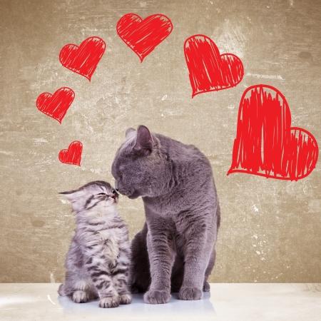En gatos del amor que se besan en el día de San Valentín Foto de archivo - 25492886