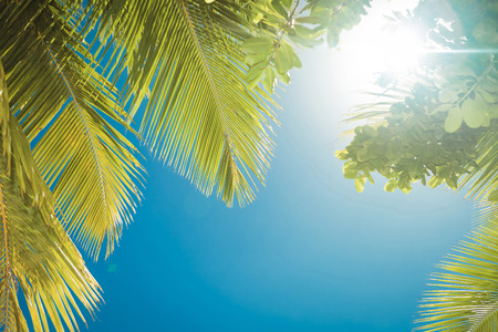 blue sky: view of the sun and clear blue sky under exotic green palm tree Stock Photo