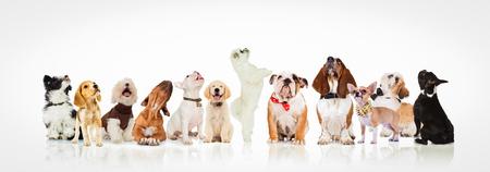 grote groep nieuwsgierige honden en puppies te kijken naar iets op een witte achtergrond Stockfoto