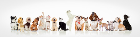 large group of curious dogs and cats looking up at something on white background Stockfoto