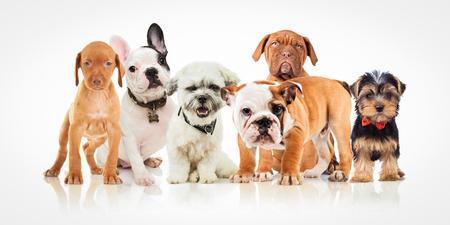 別の六つのかわいい子犬犬犬一緒に白い背景の上に立っています。