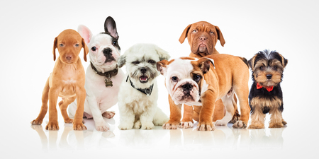 six cute puppy dogs of different breeds standing together on white background Stockfoto