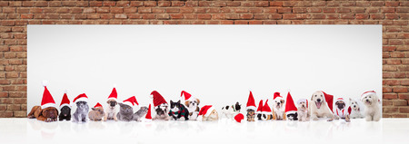 many animals wearing santa claus hats and costumes in front of a big blank billboard