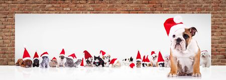 english bulldog puppy wearing santa claus hat leading a large team of animals in christmas costumes near a big blank billboard Stock Photo