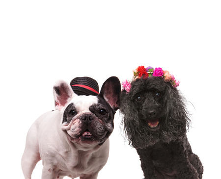 happy couple of dogs standing together on white background