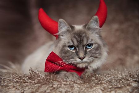 evil elegant cat wearing devil horns and is lying down on furry background Foto de archivo - 95894444
