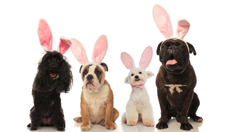 four adorable dogs wearing easter bunny ears , sitting on white background Archivio Fotografico