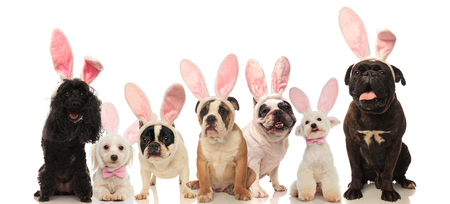 group of cute dogs wearing easter bunny ears on white background