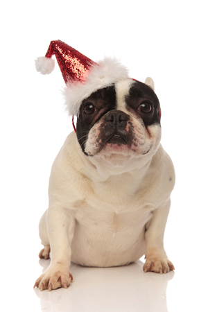 adorable french bulldog wearing a glittering christmas cap while sitting on a white background