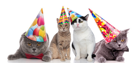 team of four party cats with colorful hats sitting and lying on white background Zdjęcie Seryjne