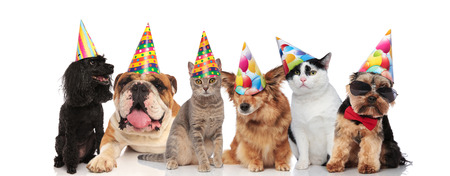 six adorable pets with colorful birthday hats sitting and lying on white background