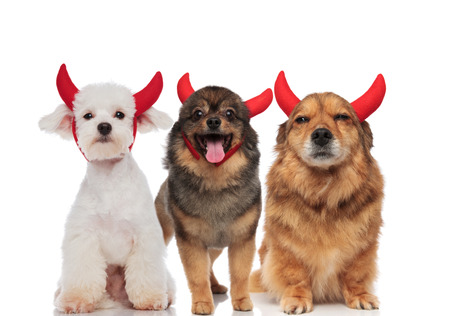 three adorable dogs dressed as devil for halloween standing and sitting on white background