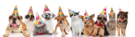 dogs and cats of different breeds wearing colorful birthday hats while standing, sitting and lying on white background Foto de archivo