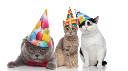 three adorable cats on a birthday party sitting and lying on white background Zdjęcie Seryjne