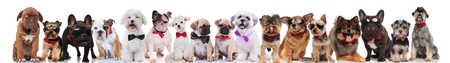 many stylish dogs of different breeds wearing bowties and sunglasses standing, sitting and lying on white background Stock Photo