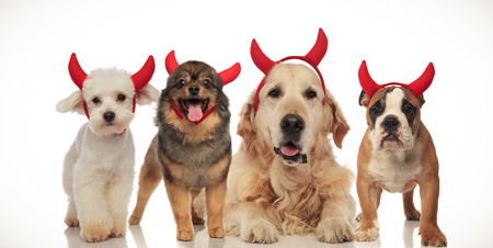 four happy dogs wearing devil horns for halloween, collage image