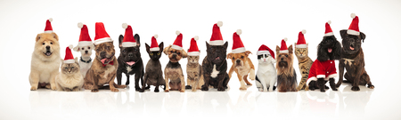 happy santa cats and dogs panting while sitting and standing on white background Stock fotó
