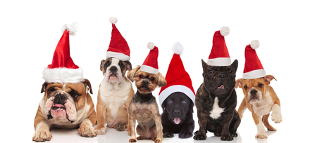 six adorable dogs wearing santa costumes sitting,  standing and lying on white background Foto de archivo