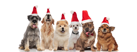 happy group of six different dogs wearing santa hats sitting on white background