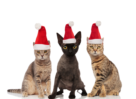group of three cute cats wearing santa claus hats while standing and sitting on white background