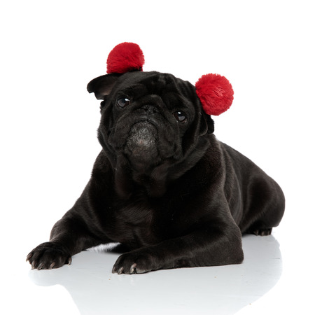 Convinced pug looking to the camera with its mouth closed while wearing red earmuffs and lying down on white studio background Banco de Imagens